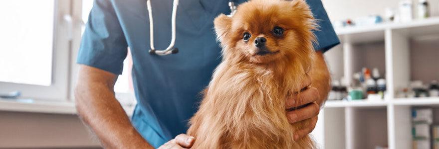 Assistanat de la santé vétérinaires